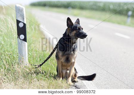 homeless dog leave alone on streetside waiting for animal shelter