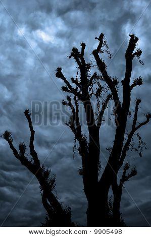 Félelmetes fa