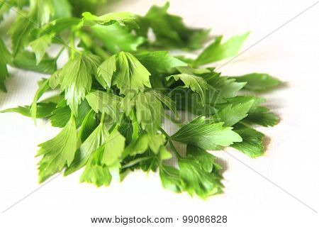 Lovage Plant