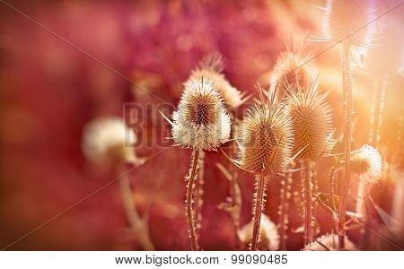 Burdock-Velcro (beautiful nature)
