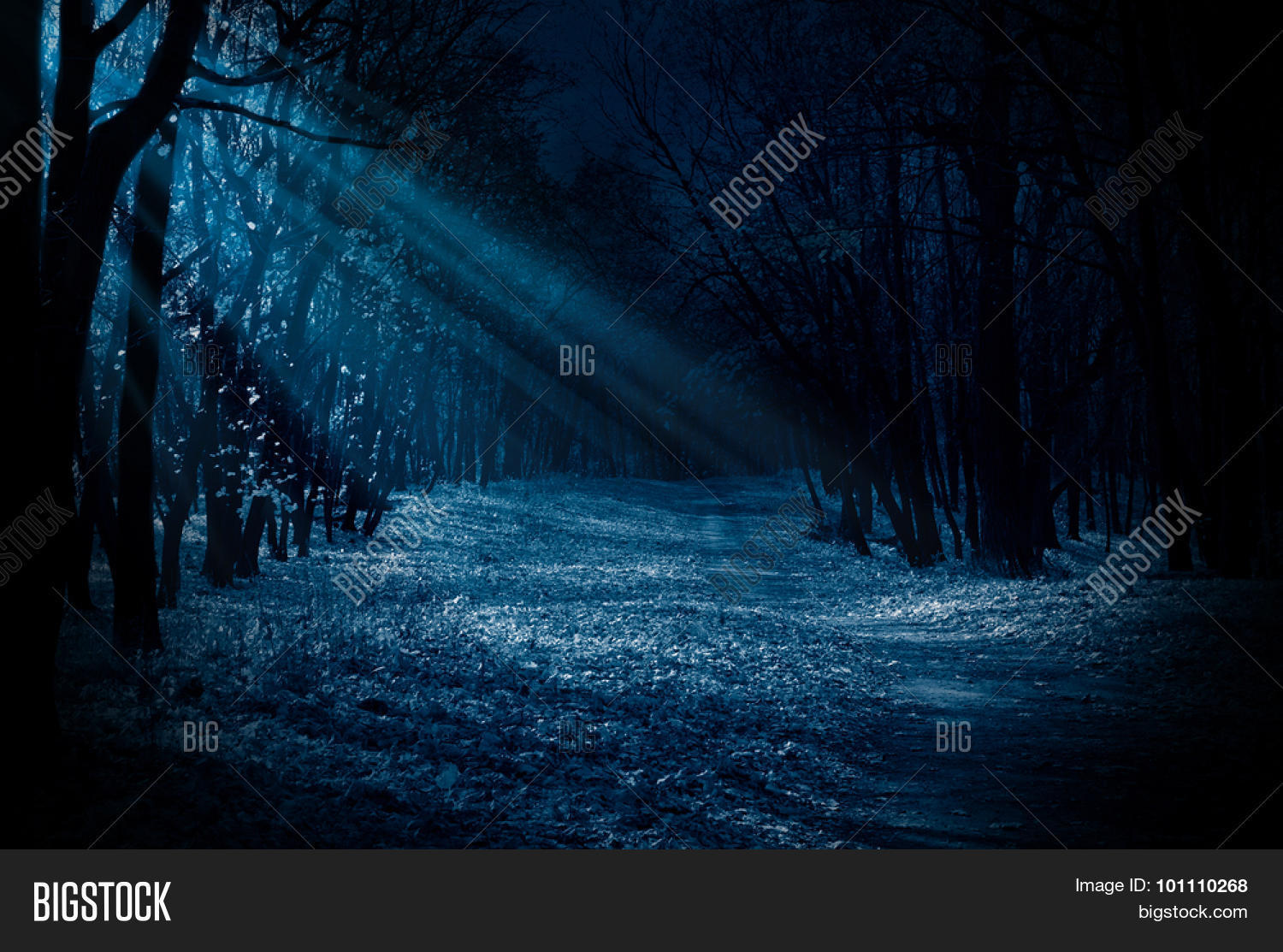 night forest moonlight image photo free trial bigstock