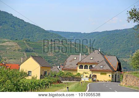 Vineyards, Lower Austria