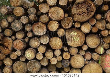 Luneburg Heath - Pile Of Tree Trunks