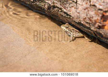 Frog And A Log, Ahtuba, Russia