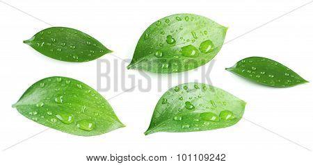 Beautiful green leave