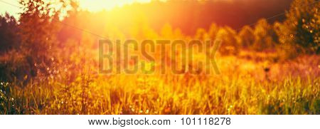 Autumn Grass Meadow Close-Up With Bright Sunlight. Sunny Spring