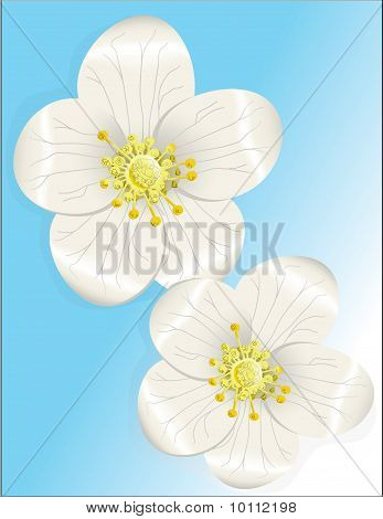 White Flower Forget Me Nots