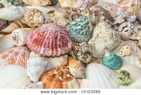Sea Shells Arranged On Isolating Background