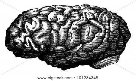 Brain mathematician Gauss, vintage engraved illustration. Earth before man 1886.