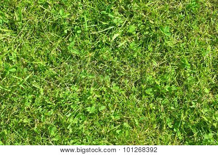 Green Grass Lawn At Sunny Summer Day