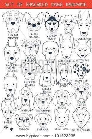 Set of 24 dogs different breeds handmade. Head dog