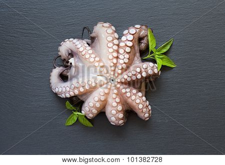 Raw Octopus With Basil