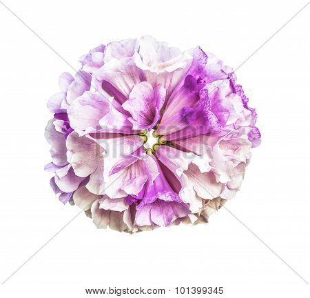 Beautiful Bouquet Flower  Isolated
