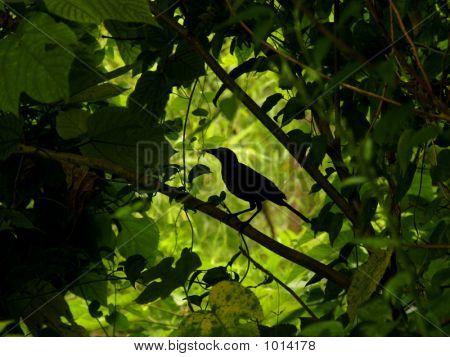 Pássaro verde