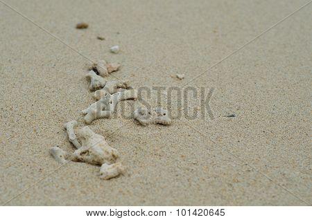 Coral Carcass On The Beach