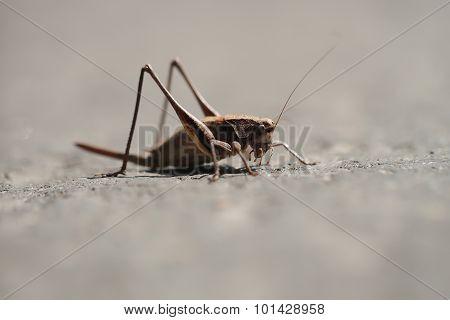 Little Grasshopper Outdoor