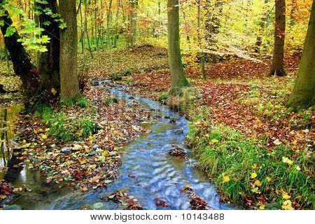 Idyllic creek in a fabulous autumnal wood