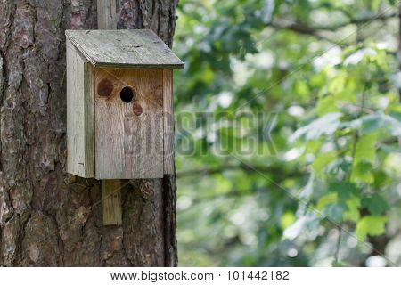 Birdhouse in wood sitting on a tree