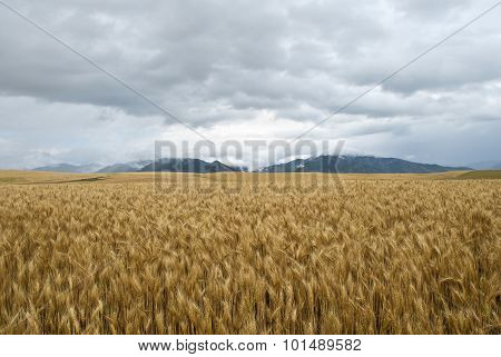Rainy Day Grain