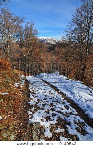 Road to autumn beechen wood.