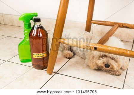 Apple Cider Vinegar Discourage Dogs And Cats From Chewing On Furniture.