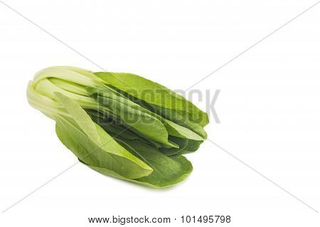 Fresh Green Leafy Bok Choy Vegetable Isolated In White.