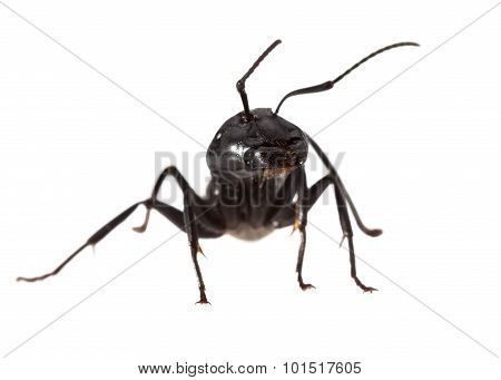 Ant Warrior Portrait