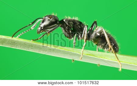 Side-view Of Ant On Grass