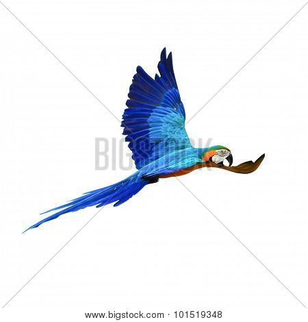 Macaw Parrot Isolated On White Background With Clipping Path