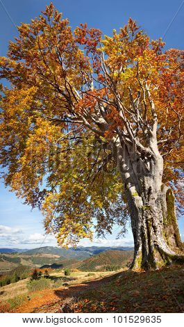 Old Colorful Tree, Autumn - Big size vertical Fall season Landscape in Mountain