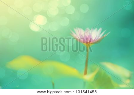 Soft Focused Image With Lotus And Blur Bokeh Background, De Focused With Flower And Blur Back Ground