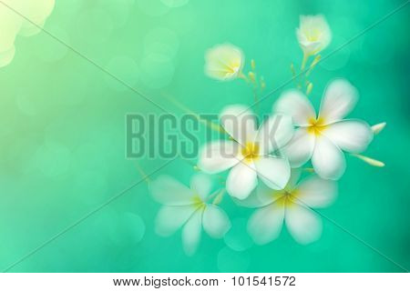 Vintage Image With Soft Focused Plumeria With Blur Bokeh Background, Soft Focused Flower With Turqou