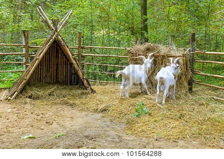 goats on the forest farm