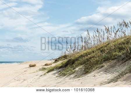 Beach Grass in Dunes