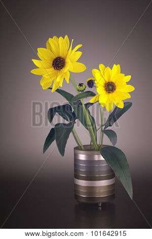 Arnica Blossoms In A Vase