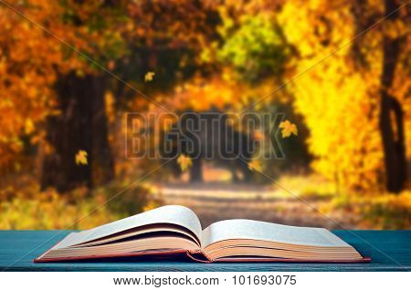 Book In The Autumn Park