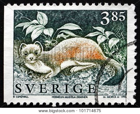 Postage Stamp Sweden 1996 The Stoat