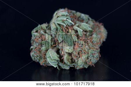 Medical Marijuana Papaya
