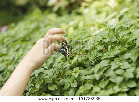 Catching Butterfly