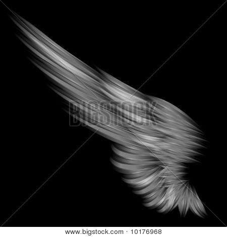 The Isolated Wing On Black Background
