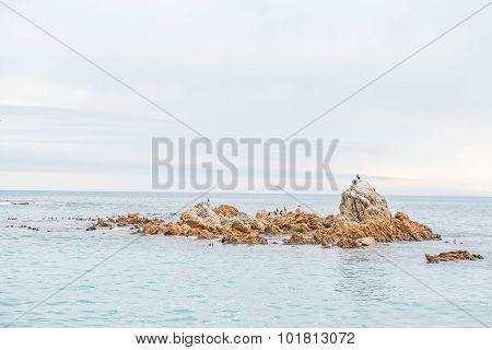 Cormorants And Gulls On An Island In The Doornbaai Harbor