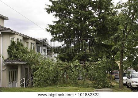 Tree blown onto house