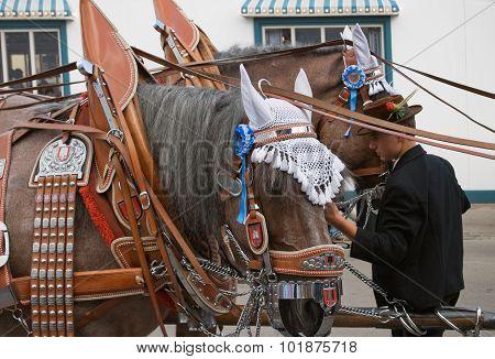 Oktoberfest Horses