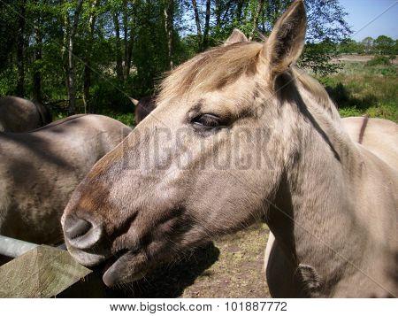 Konic pony by fence