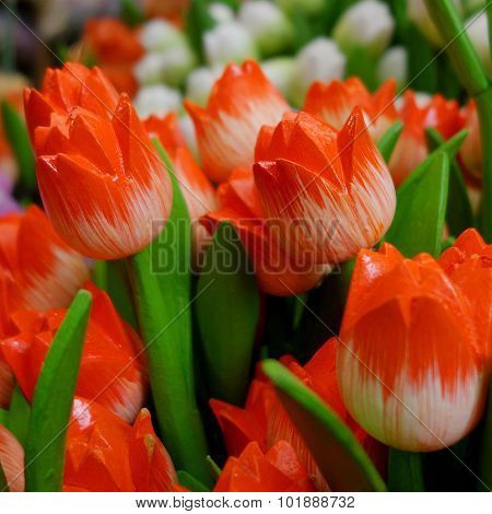 Tulips from Netherlands