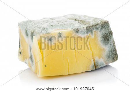 Moldy Cheddar Cheese