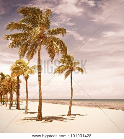 Palm trees on a beautiful sunny summer afternoon