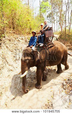 Elephant Ride In Maesa Camp, Thailand