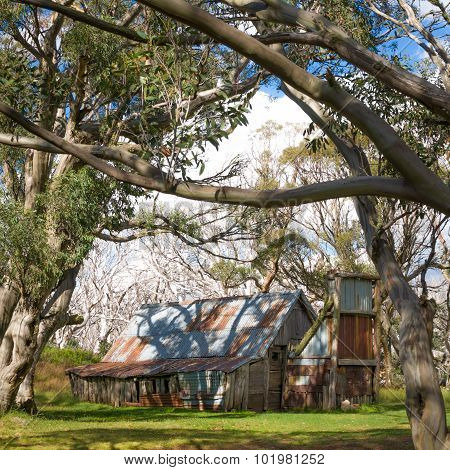 Wallaces Hut through trees, Australia