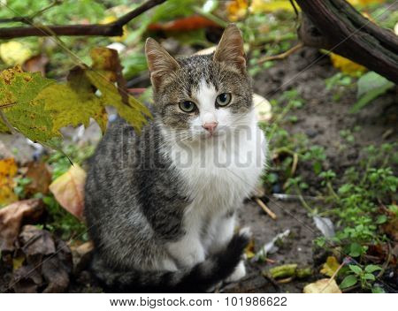 Pretty cat in fall garden